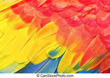 fjer, macaw, farverig