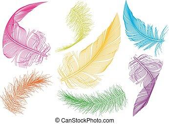 fjer, vektor, sæt, farverig