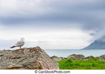 fjord, 海鸥, 海岸