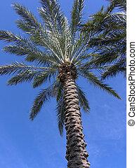 flórida, árvore palma