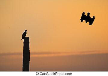 flórida, pássaros