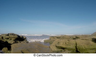 fl, chênes, plage, washington
