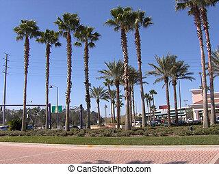 FL Tall Palms - Some Florida tall palm trees.