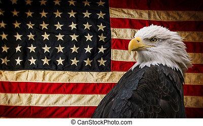 flag., 白頭鷲, アメリカ人