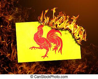 Flag burning - Wallonia - Flag burning - concept of war or ...