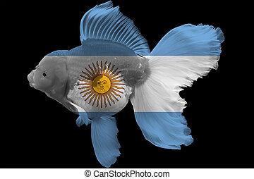 Flag of Argentina on goldfish