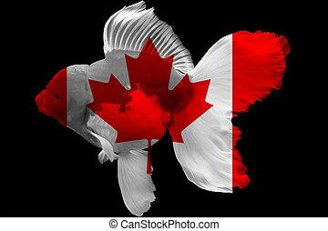 Flag of Canada on goldfish
