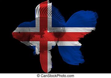 Flag of Iceland on goldfish with black background.
