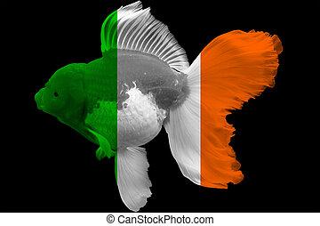 Flag of Ireland on goldfish with black background.