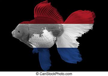 Flag of Netherland on goldfish