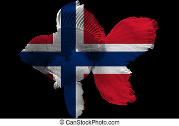 Flag of Norway on goldfish with black background.