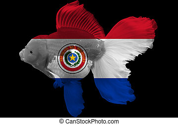 Flag of Paraguay on goldfish with black background.