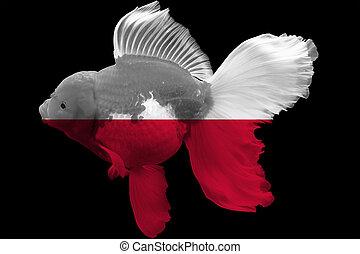 Flag of Poland on goldfish