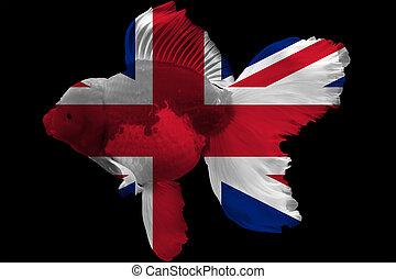 Flag of United Kingdom on goldfish with black background.
