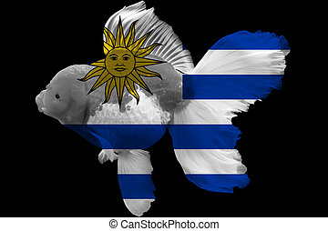 Flag of Uruguay on goldfish with black background.