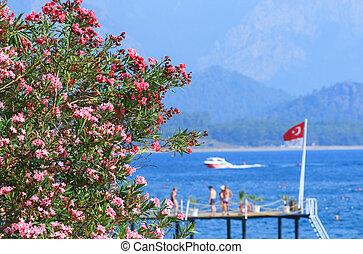 flag, tyrkisk, oleander, blomster, hav