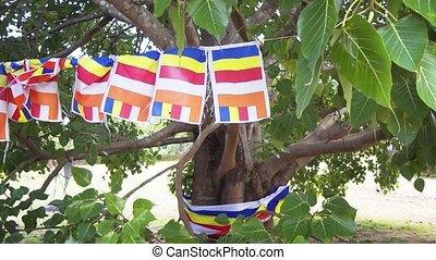 Flags of Buddhism on the sacred tree. Sri Lanka, Polonnaruwa...