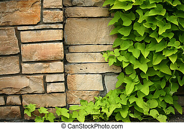 Flagstone wall with climbing ivy, space to add your own print