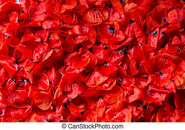 flakes of red poppies - background,