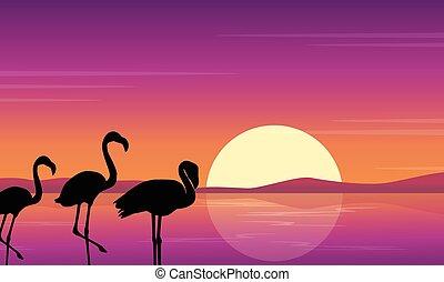 flamant rose, art, scène, vecteur, coucher soleil, silhouette