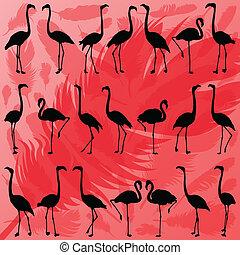 flamant rose, coloré, plumes, illustration, silhouettes, ...