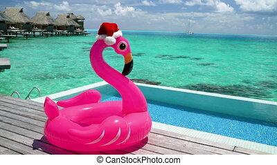 flamant rose, santa, noël, plage, piscine, fond, vacances, chapeau, voyage, flotteur