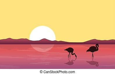 flamant rose, silhouette, lac, scène