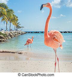 flamants rose, trois, plage
