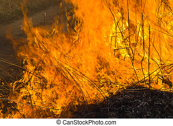 A close-uo of the flame of brushfire. Spring.