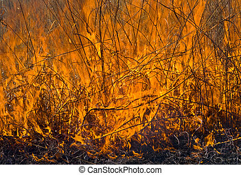 A close up of the flame of brushfire. Spring.