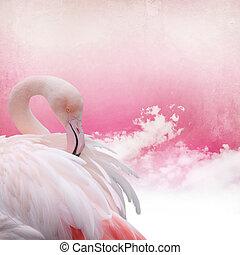 flamenco rosa, plano de fondo