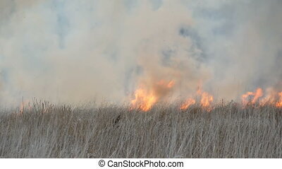 Flames burn dry grass and bushes. Fire in the forest steppe, natural disaster in the form of fire