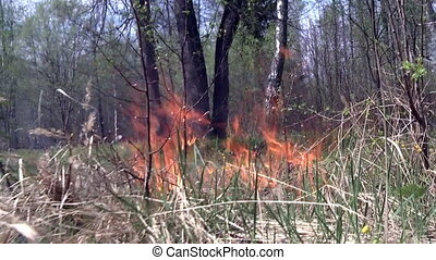 Flames in forest is cause of fire. Dry grass is possibility...