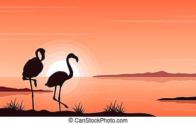 flamingó, árnykép, tó, táj