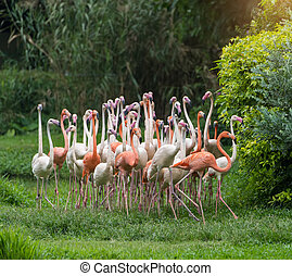 flamingó, madarak, álló, alatt, tó