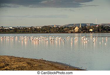 flamingó, madarak, alatt, a, tó