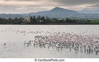 flamingó, madarak, -ban, larnaca, csípős tó