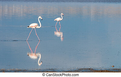 flamingó, madarak