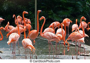 flaming, ptaszki, w, przedimek określony przed rzeczownikami, staw