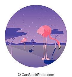 flamingo bird in the landscape