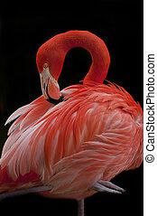 Flamingo Bird - Close-up shot of a single Flamingo Bird...