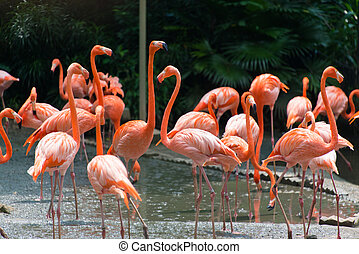 Flamingo birds in the pond
