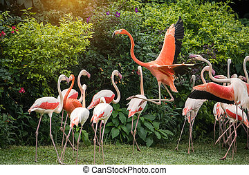 Flamingo birds standing
