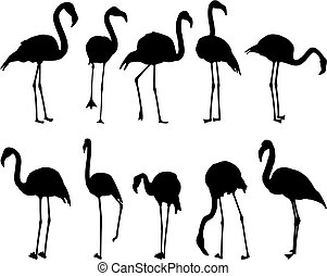 Flamingo, ten different postures