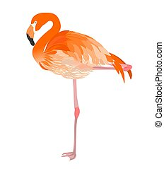Flamingo illustration raster - Isolated flamingo detailed...