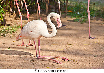 Flamingo in a zoo