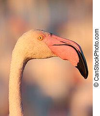 Flamingo in golden hour