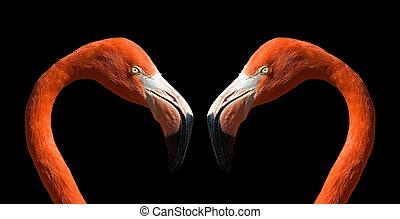 Flamingo in love...