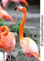Flamingo in Miami zoo
