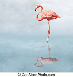 Flamingo in water casting reflection